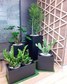 """ถูกใจ 1 คน, ความคิดเห็น 0 รายการ - Modern Garden Thailand (@moderngardenthailand) บน Instagram: """"งานตกแต่งปรับภูมิทัศน์พื้นที่ภายในOffice แบบสวนกระถาง #ต้นไม้ฟอกอากาศ 🌱 --------------------------…"""" Thailand, Garden, Modern, Shop, Plants, Garten, Trendy Tree, Gardens, Planters"""