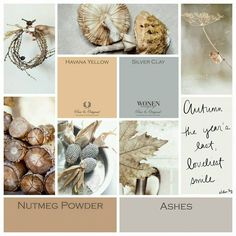 Pure & Original collage autumn