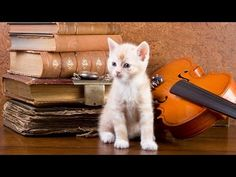Classical Music for Kids in the Classroom ♫ Mozart for Kids ♫ Instrumental Music for Children - YouTube