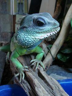 Christina's Lizard, photo by Christina Hollering