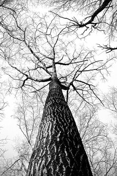 Free stock photo of black-and-white, branches, tree, high