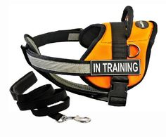 Dean  Tylers DT Works Orange IN TRAINING  Harness with Chest Padding Medium and Black 6 ft Padded Puppy Leash ** To view further for this item, visit the image link.(This is an Amazon affiliate link)