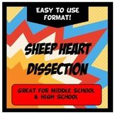 Sheep Heart Dissection Science Lab Activity