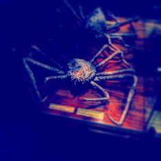 #crab #krabbe #meer #tier #animal #tier #mr.crabs #spongebob #austellungstück #tot