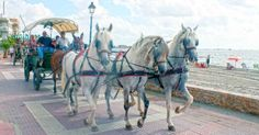 Horse Drawn Carriages.