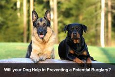 15 Great Rottweiler Mixes: Rottie Mixed Breeds For the Win! - Check out our list of 15 incredible Rottweiler mixed breeds – these guys are too cool for school! German Shepherd Rottweiler Mix, German Shepherd Training, Shepherd Dogs, German Dog Breeds, Large Dog Breeds, Pitbull Terrier, Terrier Mix, Protection Dog Training, Family Protection