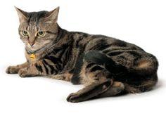 Medi-Vet - 10 Health Tips for Senior Cats - Tips on Senior Cat Food & Senior Cat Care