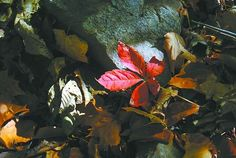 Autumn revelry: Fall colors should be vibrant; festivals offer much - By Beth Ann Downey, The Altoona Mirror