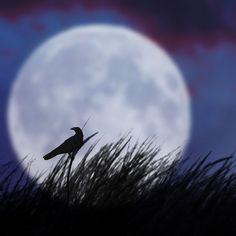 The bird and the moon II - (CC) Luz Adriana Villa A - www.flickr.com/photos/luchilu/2414457426/in/set-72157604008030177