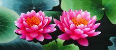 Pair of Pink Lotus Water Lilies #Beautiful #Handmade #Silk #Embroidery #Art #Etsy 76075 http://www.queensilkart.com/100-handmade-embroidery-feng-shui-framed-flower-floral-pair-of-pink-lotus-blossoms-water-lily-76075/ These colorful flowers are a reproduction of a glass reproduction of lotus flowers. In Feng Shui, lotus flowers are a powerful symbol of purity, one of the Eight Auspicious Symbols of Buddhism.