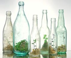 bottle terrariums