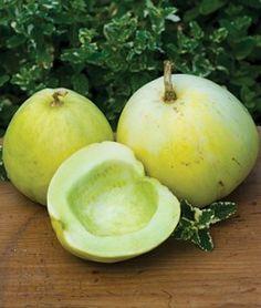 Melon Silver Light Hybrid | Garden Seeds and Plants