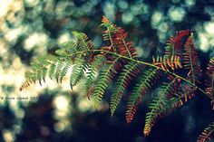 lovely ferns© Annie Japaud 2013
