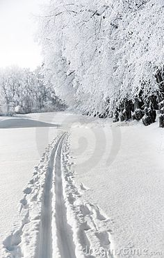 cross country ski tracks. This is such a magical feeling!