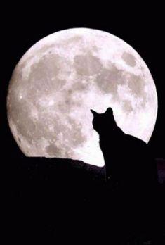 Full moon cat sillouette.