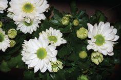 Spring, The Help, Flora, Plants, Photography, Etsy, Photograph, Fotografie, Photoshoot