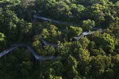alexandra arch + forest walk look architects