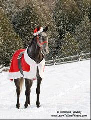 Make a horse Santa blanket. Gathering ideas for the photo shoot I have planned for my daughter and her riding horse.