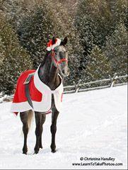 Make a horse Santa blanket
