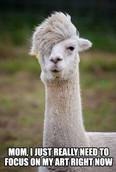 Emo alpaca - Funny Pictures, MEME and LOL by Funny Pictures Blog