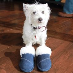 Does your fur baby also make it hard to leave the house in the morning?! . . . . #slippers #slipperlife #comfort #comfortfirst #fashion #feet #shoes #sheepskin #style #quality #shop #shopping #spring #relax #wednesday #pretty #yoga #health #fit #fitness #fitlife #fitspo #follow #amazing #picoftheday #instagood #loveit #selfie #online #onlineshopping by nuknuuk_slippers