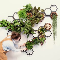 Extra large indoor living wall planter kit - a botanical feast for the senses! Create your own masterpiece with this vertical wall planter kit consisting of 24 terracota planters and 12 frames. Vertical Garden Planters, Indoor Planters, Wall Mounted Planters Indoor, Vertical Plant Wall, Vertical Garden Design, Indoor Vertical Gardens, Garden Wall Planter, Vertical Planting, Balcony Planters
