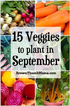 Don't give up on your garden in September! These fifteen vegetables can handle the late-summer heat and will give you a tasty harvest this fall and winter. Includes recommended varieties and planting tips. #gardening #fallgardening #vegetablegardening