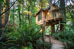stay in a real life treehouse at tree bones resort in WA
