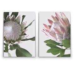 Wall art- King and Queen Protea – Oz Decor and Protea Art, Protea Flower, Floral Drawing, Floral Watercolor, Art Floral, Desert Flowers, Sketch Inspiration, Flower Art, Art Flowers