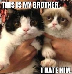 Grumpy sibling rivalry!