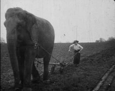 More Elephants... This elephant may be far away from the front but is still providing vital work, helping a woman plough a field at Sir George Sanger's farm in Surrey, England