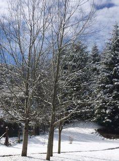 Una primavera nevada en el parque del hotel Tunquelén en #Bariloche.