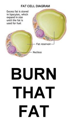 How to burn fat and lose weight.
