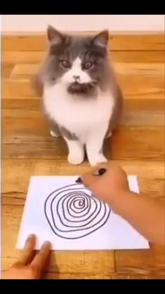 Funny Animal Jokes, Funny Cute Cats, Cute Baby Cats, Cute Little Animals, Funny Cat Videos, Cute Funny Animals, Cute Animal Photos, Cute Animal Videos, Funny Animal Pictures
