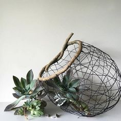 Seriously shut the front door!! Look what @mrsbmunro creates in a random weaving afternoon!! Book a place at her next workshop - you have three #basketry styles to choose from. Book online now at dtllworkshops.com.au #workshops #sydney #dtllworkshops