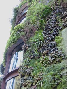 Green wall by Patrick Blanc
