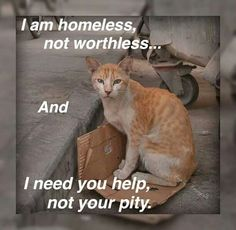 That doesn't necessarily mean you have to take every stray cat home...there are other things you can do. Such as: Notifying a rescue organization (preferably one with a no-kill shelter affiliated with it), especially in extremely cold or hot weather. Supp