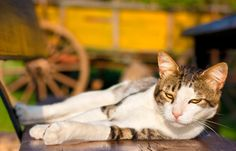 Amputacja pazurów u kotów - barbarzyństwo