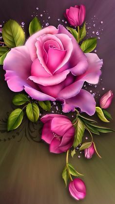 Hot Pink Roses!