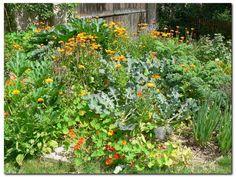 Jedlá zahrada-jedlý živý plot-jedlé liány