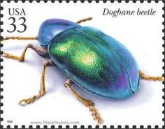 USA postage stamp featuring the Dogbane beetle Postage Stamp Collection, Old Stamps, Postage Stamp Art, Colouring Techniques, Happy Animals, Fauna, Stamp Collecting, Mail Art, Science Nature