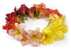 lilies-3