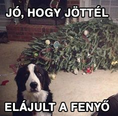ideas for funny dogs memes hilarious christmas