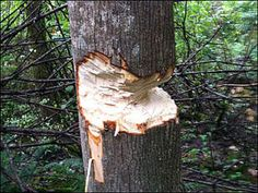 cutting down a tree - Norton Safe Search