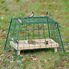 Schutzkäfig Maxi für Bodenfresser, damit Katzen und Raubvögel nicht dran kön… Protective cage Maxi for soil eaters, so that cats and birds of prey can not turn and that the dog does not eat the bird food. Small Garden Birds, Small City Garden, Big Garden, Diy Bird Feeder, Humming Bird Feeders, Bird Food, Interior Garden, Animal Decor, Garden Boxes