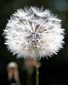 Beautiful weed, via Flickr.