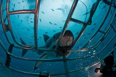Shark Diving at the Neptune Islands, South Australia