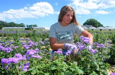 'Farm Days with Rose' in Wading River: Sunday Scene...