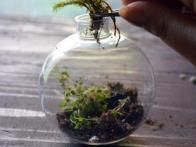 Add moss to the terrarium. You can also add more plants if desired, but be careful not to overcrowd.