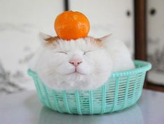The Fruit Bowl | Cutest Paw